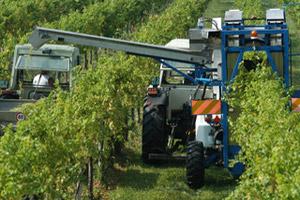 Vendemmia automatizzata - Friuli