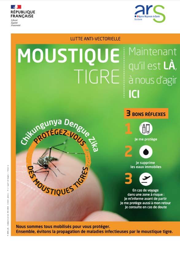 moustique_tigre1