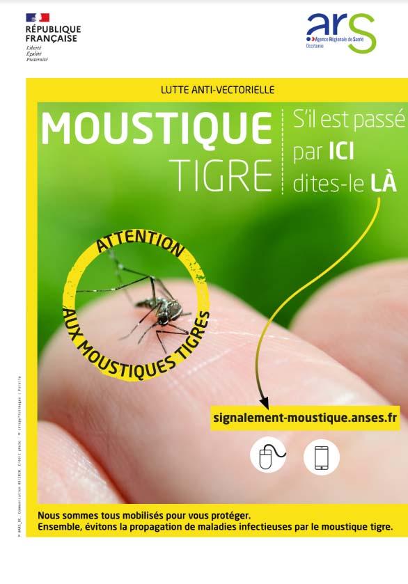 moustique_tigre2
